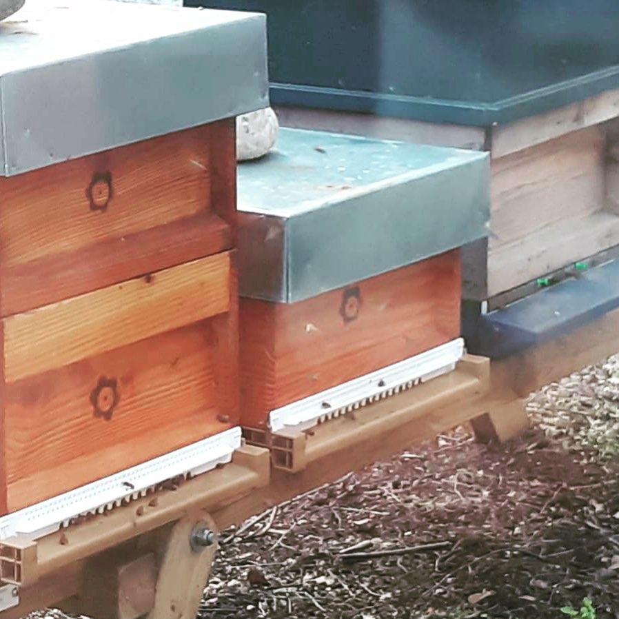 Na een week met strenge vorst hebben we nu te maken met voorjaarsweer. De #bijen komen al met redelijk wat stuifmeel binnen van onder andere sneeuwklokjes en elzenbloesem. Als #imker laat ik de bijen nog met rust en laat ze even lekker herstellen en hun stuifmeelreserves aanvullen  @isalabijenstand @isalaziekenhuis