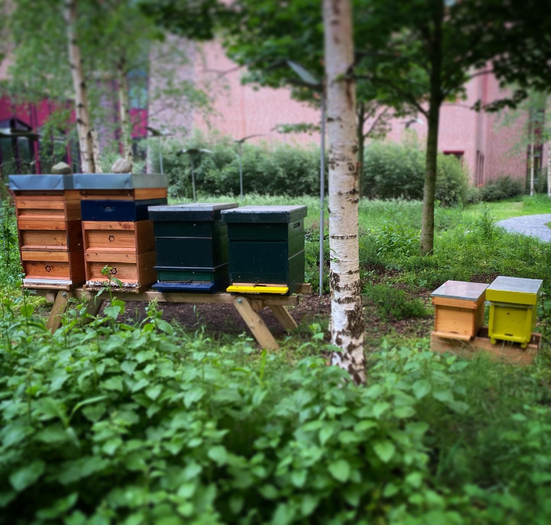 De actuele situatie is dat de @isalabijenstand uit 4 standaard #bijenkasten bestaat met grote volken en 2 #zesraamskasten met een #natuurzwerm en een #kunstzwerm. Een natuurzwerm is een zwerm op initiatief van de #bijen. Een kunstzwerm is een zwerm op initiatief van de #imker.  @isalaziekenhuis