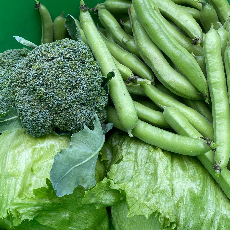 De #biologische #moestuin heeft het beste met ons voor. wat een weelde. #ijsbergsla #tuinbonen #broccoli 🥬🥦 #eigenteelt
