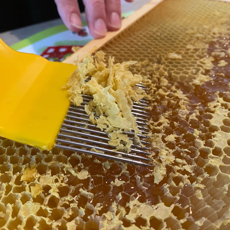 Wanneer honing van goede kwaliteit is en het vocht genoeg is verdampt worden de cellen in het raampje door de honingbijen zorgvuldig met dekseltjes van bijenwas afgesloten. Bij het oogsten van de honing worden de cellen ontzegeld, bijvoorbeeld met een ontzegelvork. Het liefst worden de ramen vlak voor het slingeren uit de kast gehaald. De honing is dan bij het slingeren nog warm en daardoor vloeibaarder (en daardoor dus gemakkelijker uit de celletjes te slingeren. Misschien is er binnenkort wel weer honing beschikbaar voor de Isala medewerkers… 🤔 #bijen #imker #honing #bijenwas @isalabijenstand @isalaziekenhuis